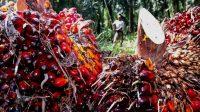 Swiss Gelar Referendum Terkait Minyak Sawit Indonesia