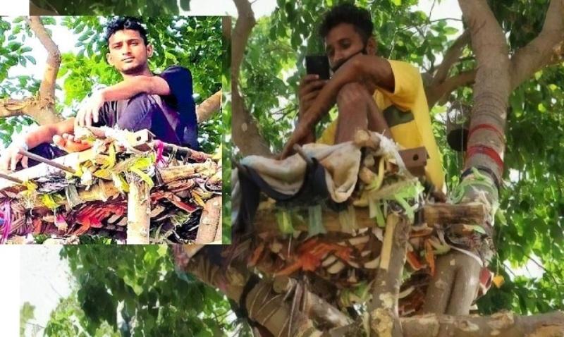 shiva has been 11 days on a tree