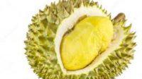 Kosa Kata Bahasa Indonesia For Fruits And Vegetable