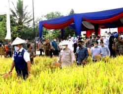 Panen Raya Calon Benih Padi : HD Sanjung Prestasi Banyuasin Di Sektor Pertanian