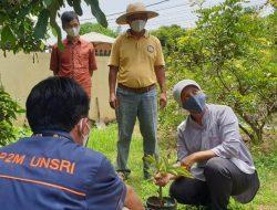 FP Unsri Dapati Budi Daya Porang Cocok Sebagai Tanaman Sela Menambah Penghasilan Petani