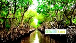 The Restoration of Mangrove Forests Still On Indonesian Attention
